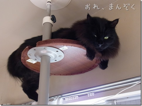 R0034564_thumb-ケージ特訓★隊長/昨日のおやこ部屋
